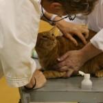 cat-judges-11