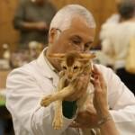 cat-judges-14