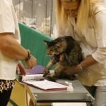 cat-judges-3