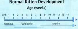 The Behavioural Impacts of Weaning on Kittens
