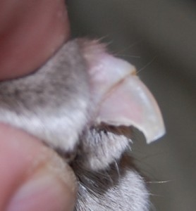 Cats clipped claw