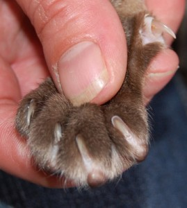 Front Paw