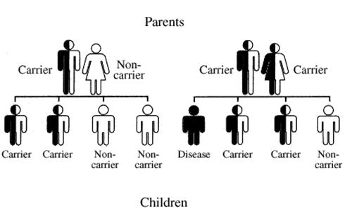 Parents Offspring